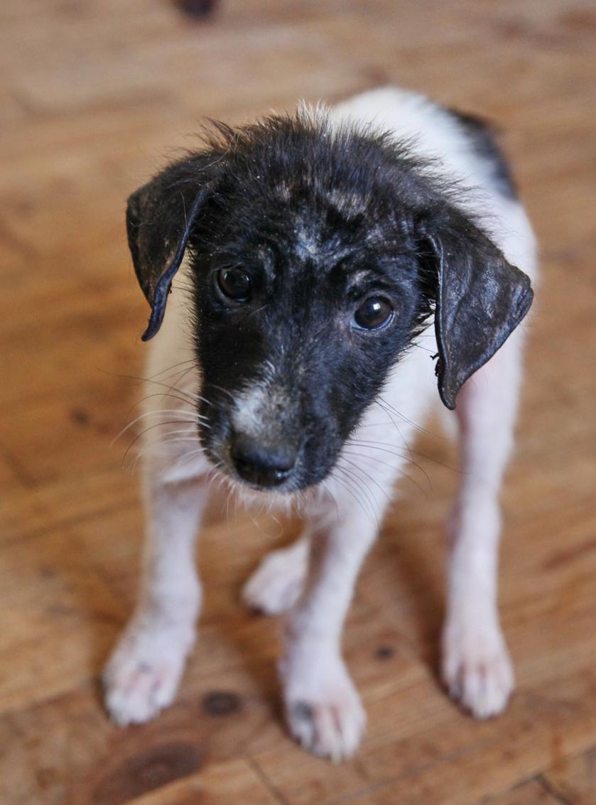 Irwins Animal Rescue